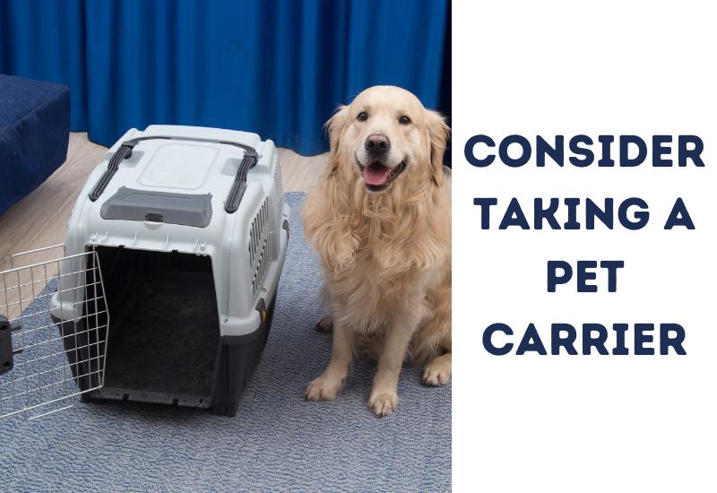 Consider taking a pet carrier