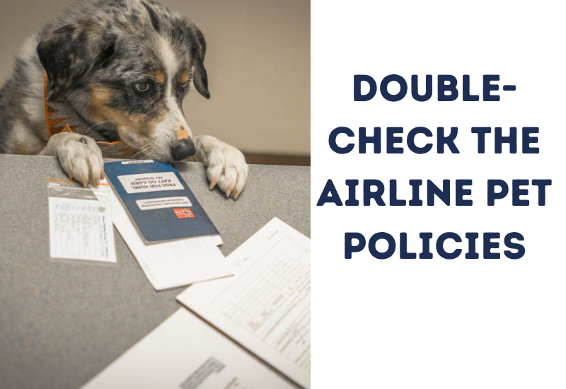 Double-check the Airline pet policies